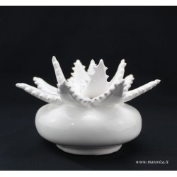 Aloe plant in Sicilian ceramic Caltagirone in  white...